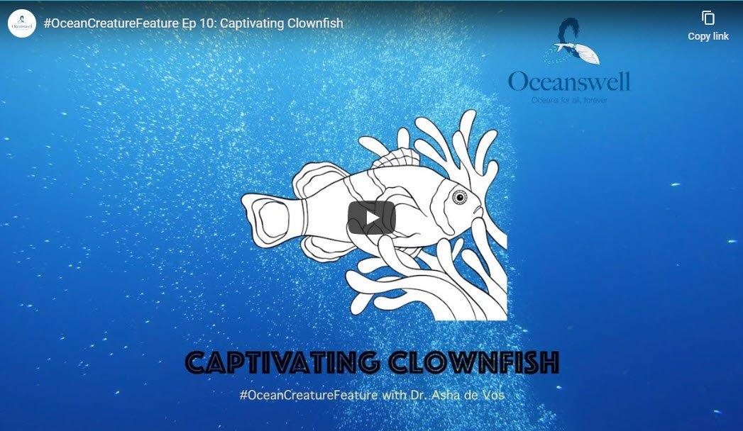 Episode 10: Captivating Clownfish 1