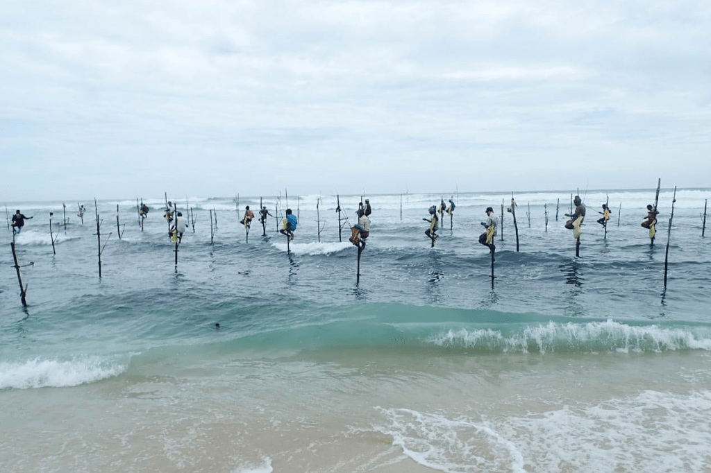 Sri Lanka Stilt Fisherman