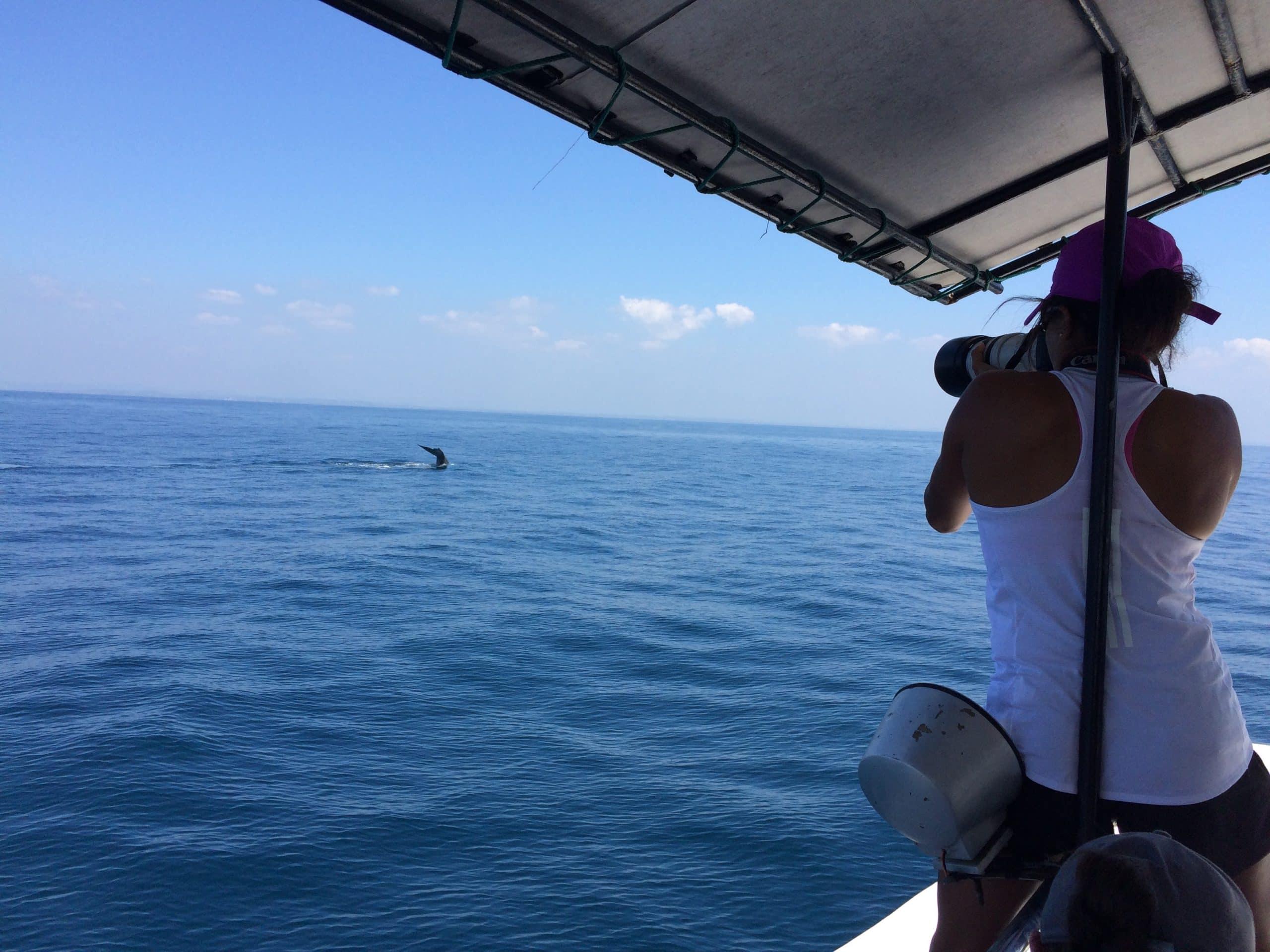 The Sri Lankan Marine Mammal Photo-identification Database 5