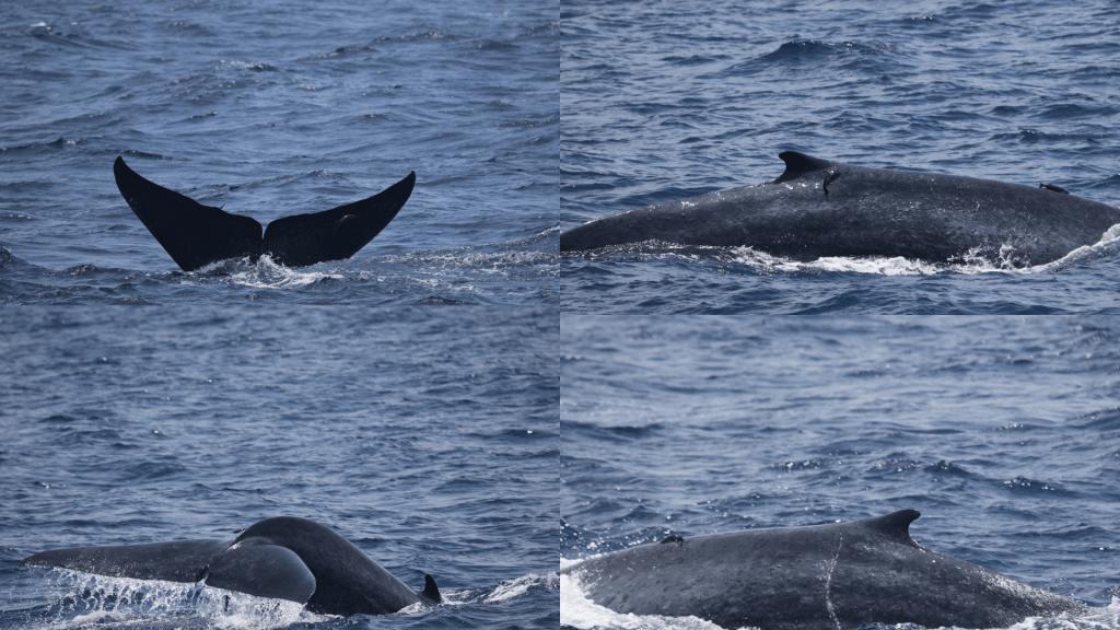 The Sri Lankan Marine Mammal Photo-identification Database 3