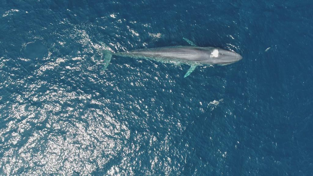 The Sri Lankan Blue Whale Project 6